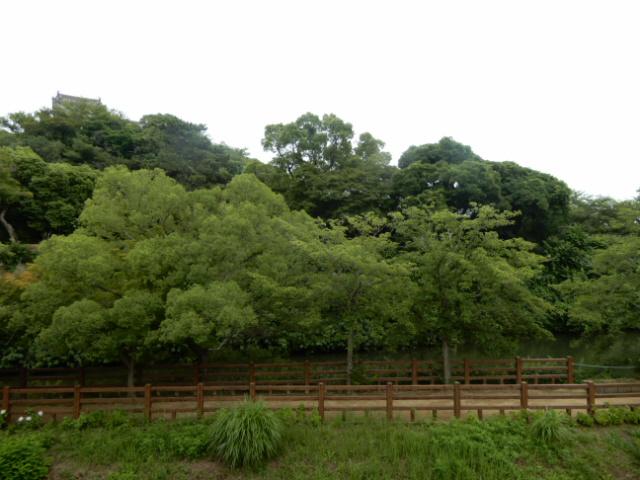 物件番号: 1115166504  姫路市小利木町 1K ハイツ 画像7